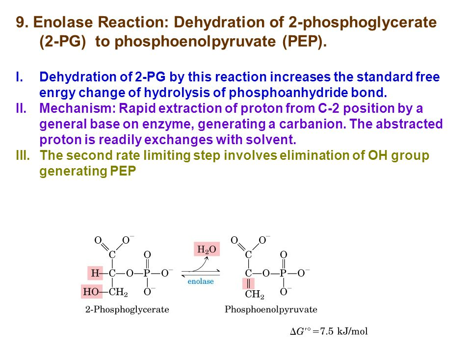 9. Enolase Reaction: Dehydration of 2-phosphoglycerate (2-PG) to phosphoenolpyruvate (PEP).