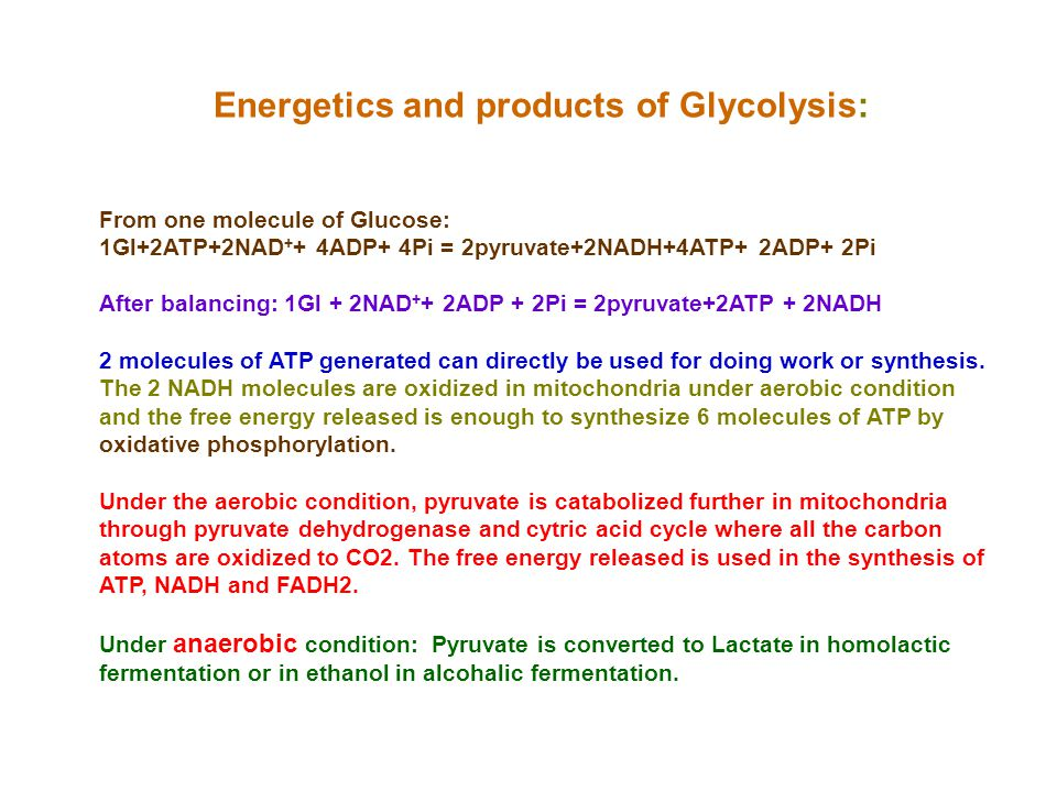 Energetics and products of Glycolysis: