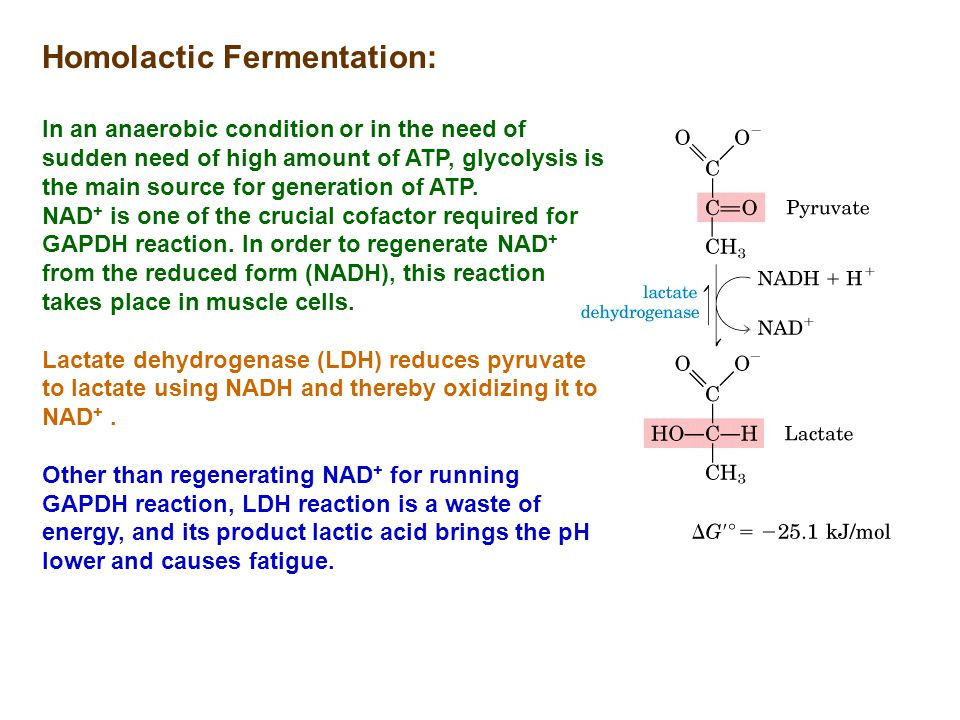 Homolactic Fermentation: