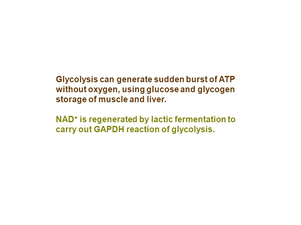 Glycolysis can generate sudden burst of ATP without oxygen, using glucose and glycogen storage of muscle and liver.