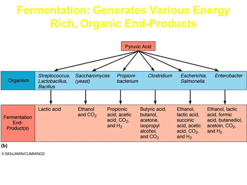 Fermentation: Generates Various Energy Rich, Organic End-Products