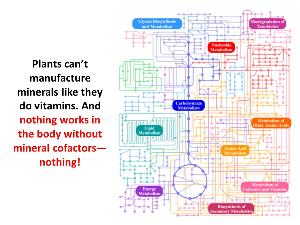 Plants can't manufacture minerals like they do vitamins