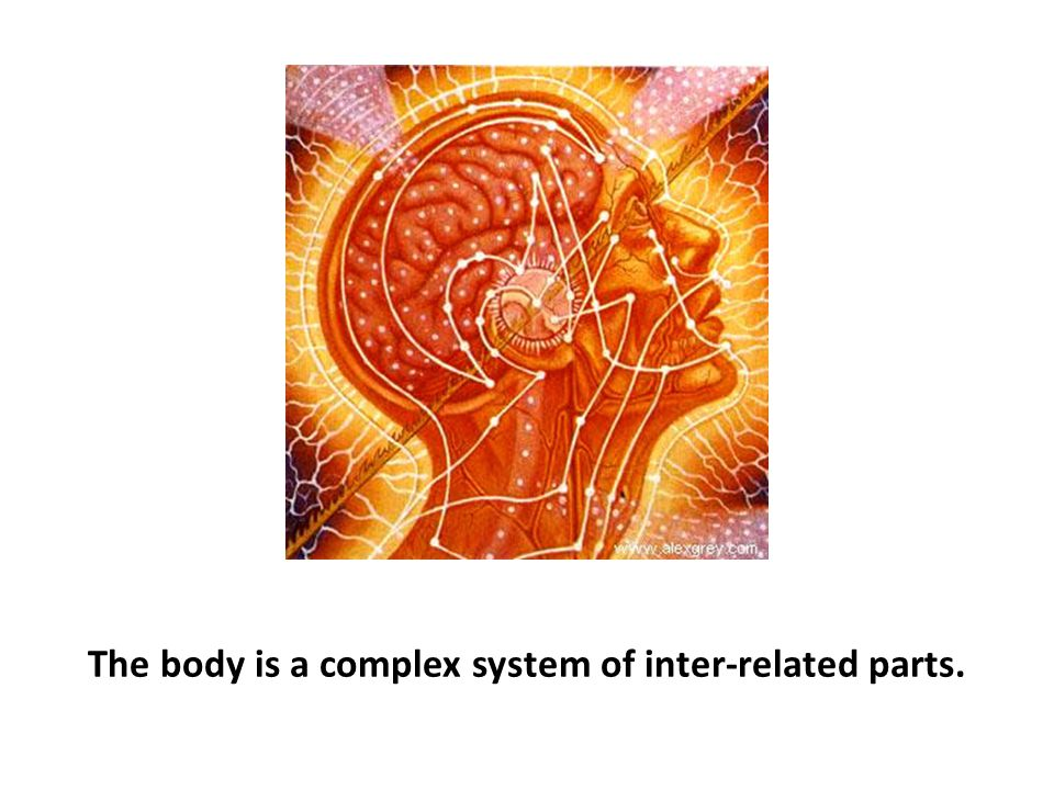 The body is a complex system of inter-related parts.
