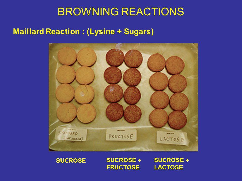 BROWNING REACTIONS Maillard Reaction : (Lysine + Sugars) SUCROSE