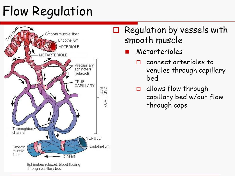 Flow Regulation Regulation by vessels with smooth muscle Metarterioles