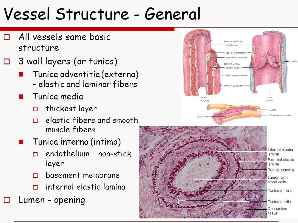 Vessel Structure - General