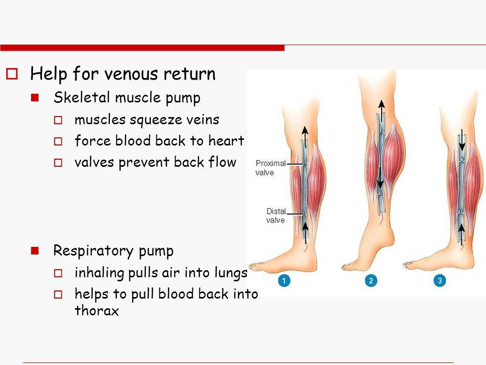 Help for venous return Skeletal muscle pump Respiratory pump