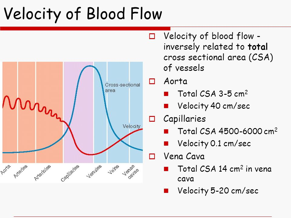 Velocity of Blood Flow 4/11/2017. Velocity of blood flow - inversely related to total cross sectional area (CSA) of vessels.
