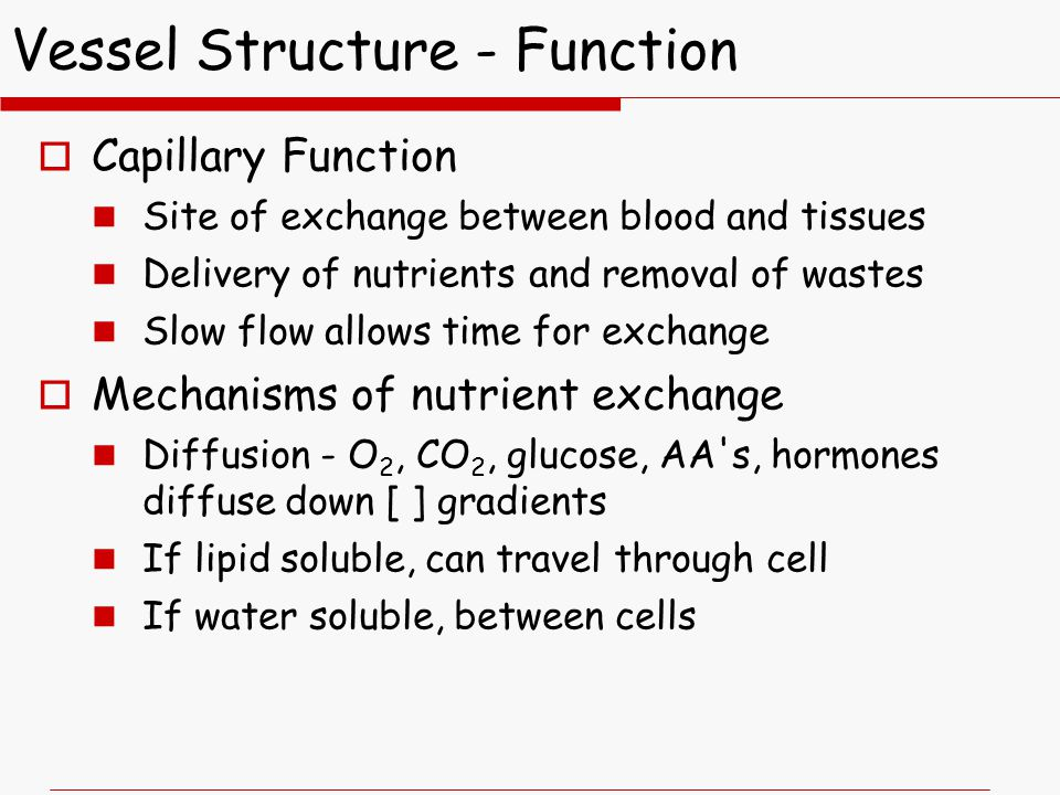 Vessel Structure - Function