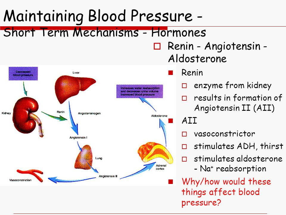 Maintaining Blood Pressure - Short Term Mechanisms - Hormones