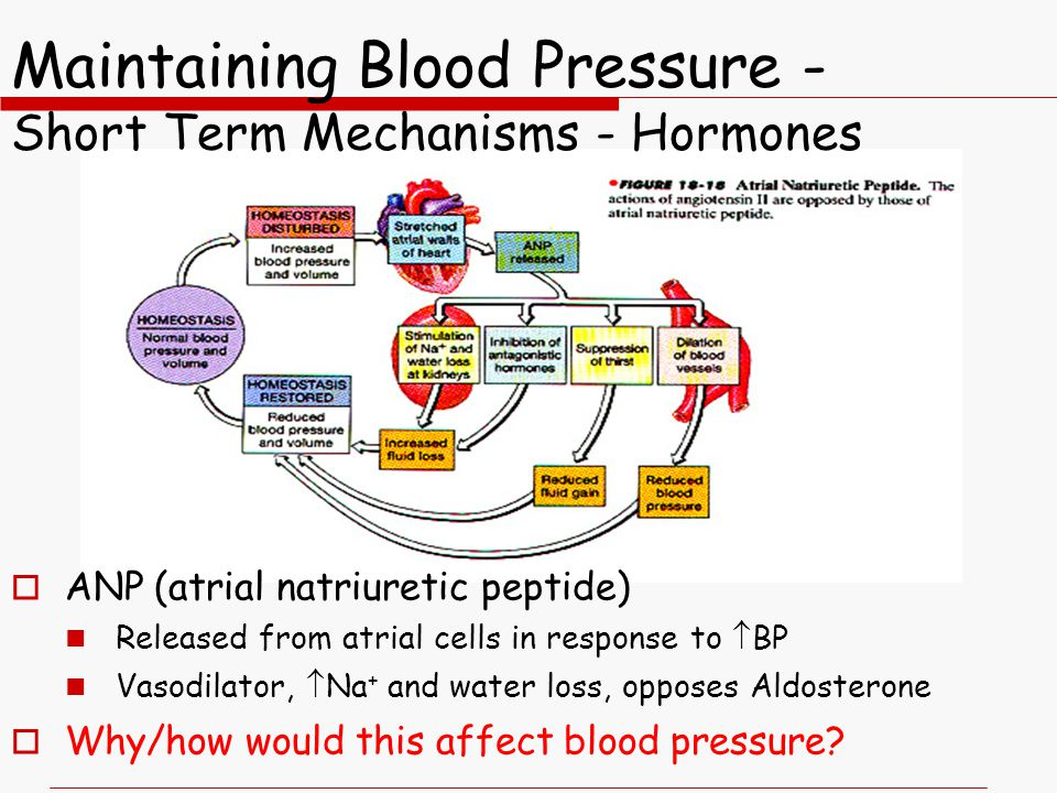 Maintaining Blood Pressure - Short Term Mechanisms - Hormones