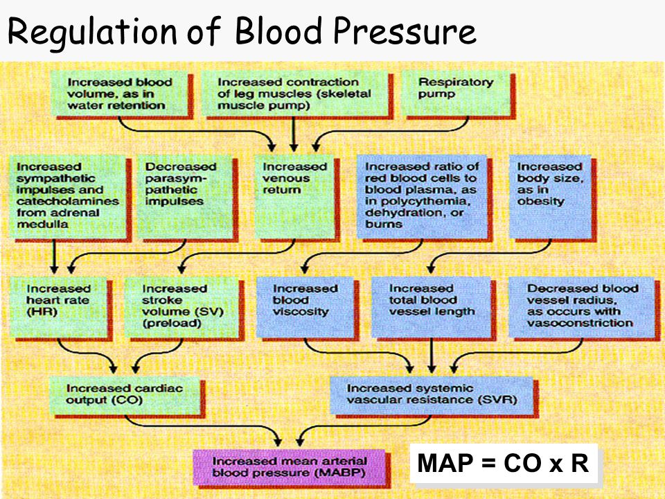 Regulation of Blood Pressure