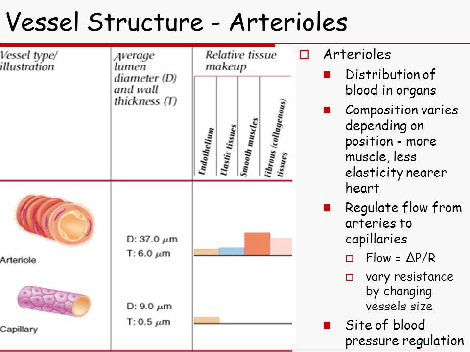 Vessel Structure - Arterioles