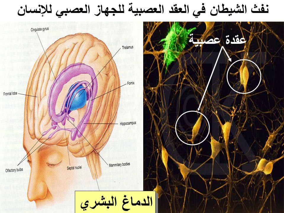 نفث الشيطان في العقد العصبية للجهاز العصبي للإنسان