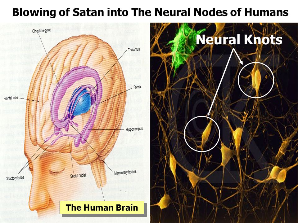 Blowing of Satan into The Neural Nodes of Humans
