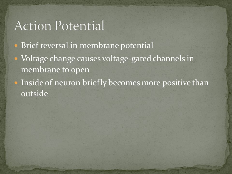 Action Potential Brief reversal in membrane potential