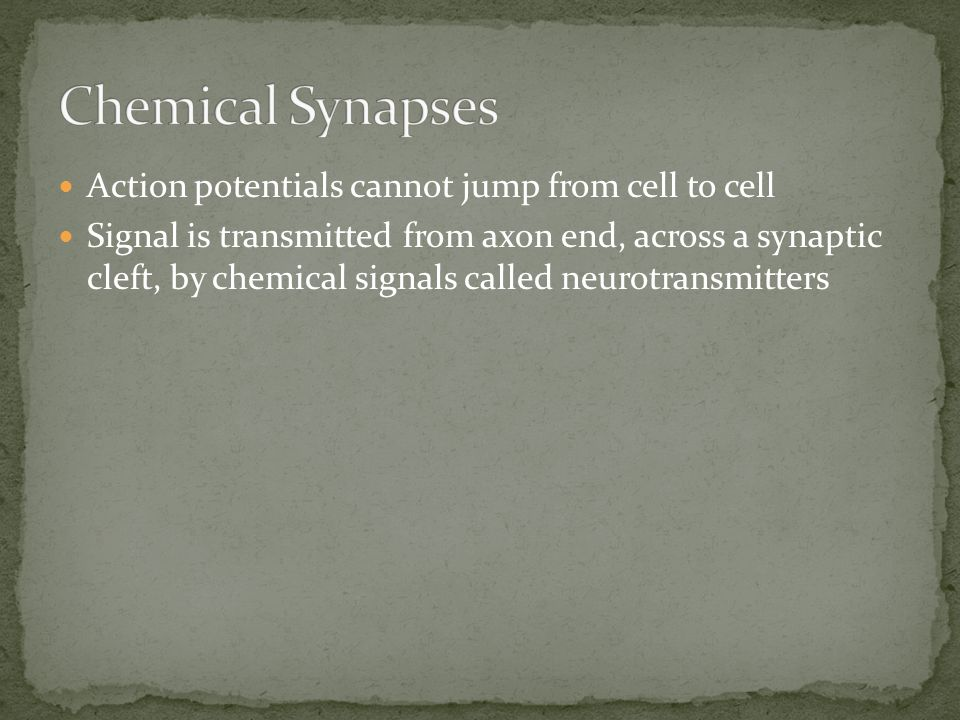 Chemical Synapses Action potentials cannot jump from cell to cell