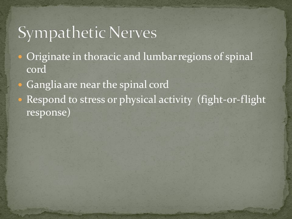 Sympathetic Nerves Originate in thoracic and lumbar regions of spinal cord. Ganglia are near the spinal cord.