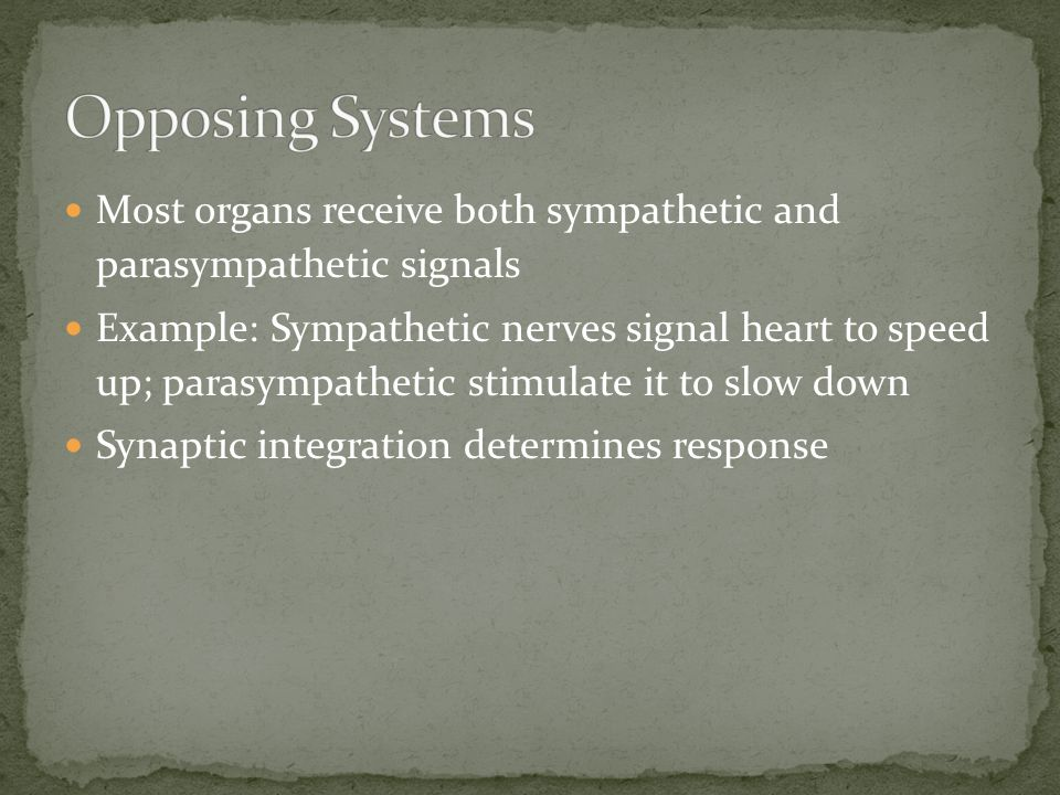 Opposing Systems Most organs receive both sympathetic and parasympathetic signals.