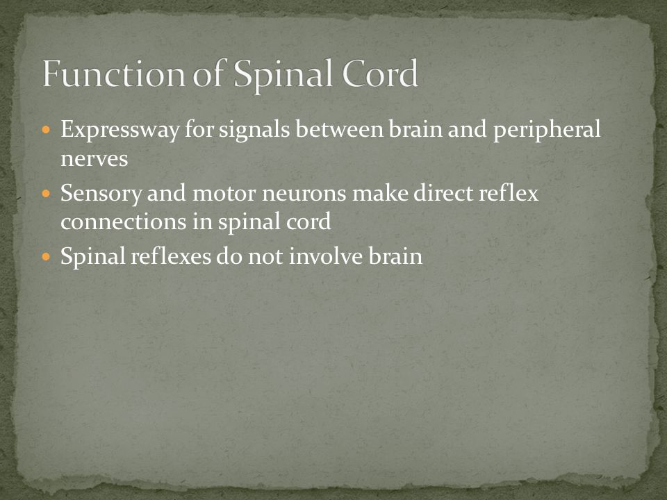 Function of Spinal Cord
