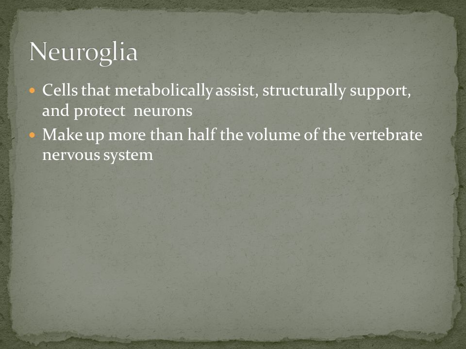 Neuroglia Cells that metabolically assist, structurally support, and protect neurons.