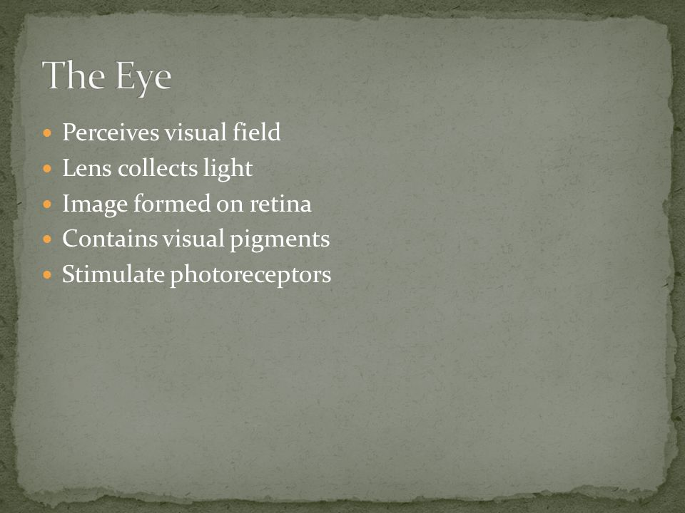 The Eye Perceives visual field Lens collects light