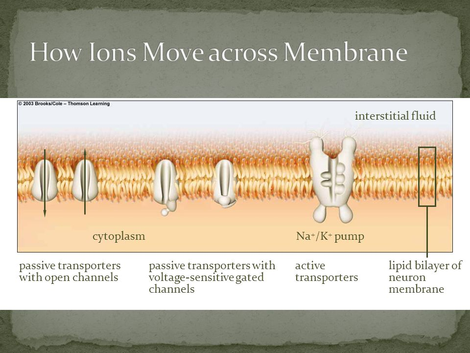 How Ions Move across Membrane