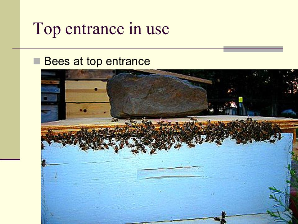 Top entrance in use Bees at top entrance