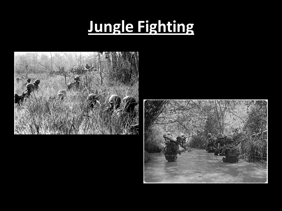 Jungle Fighting