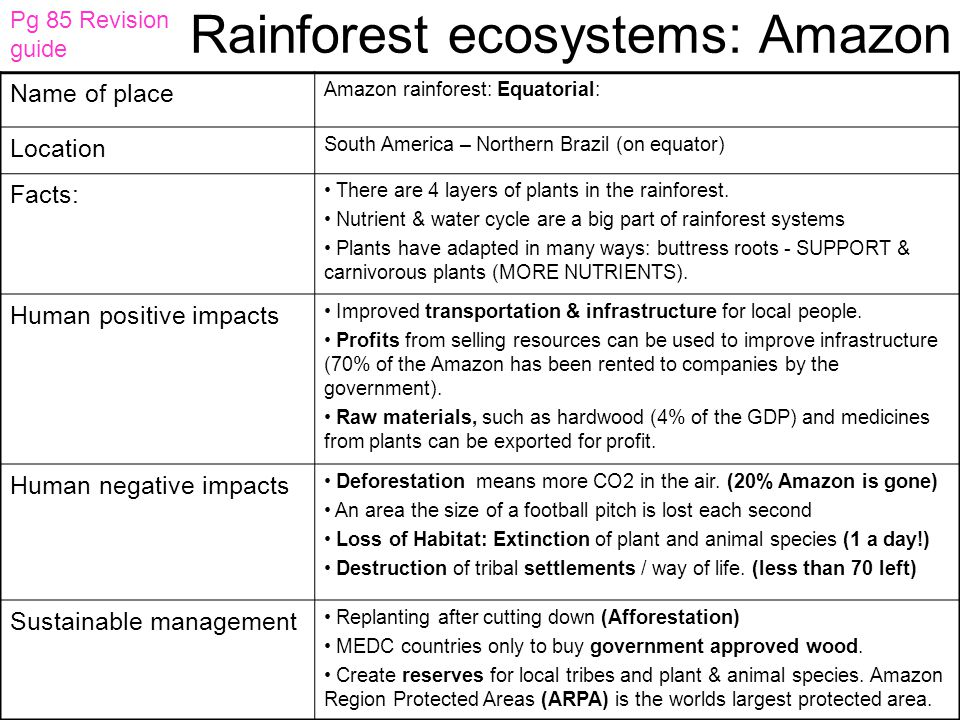 Rainforest ecosystems: Amazon
