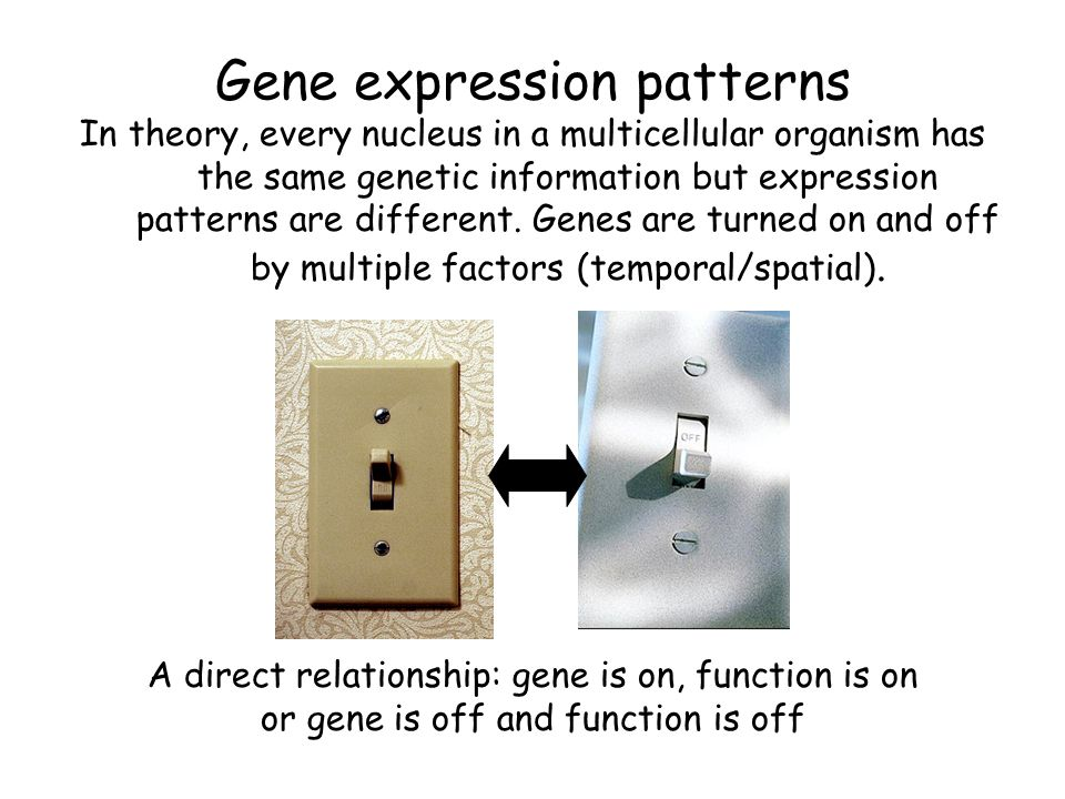 Gene expression patterns