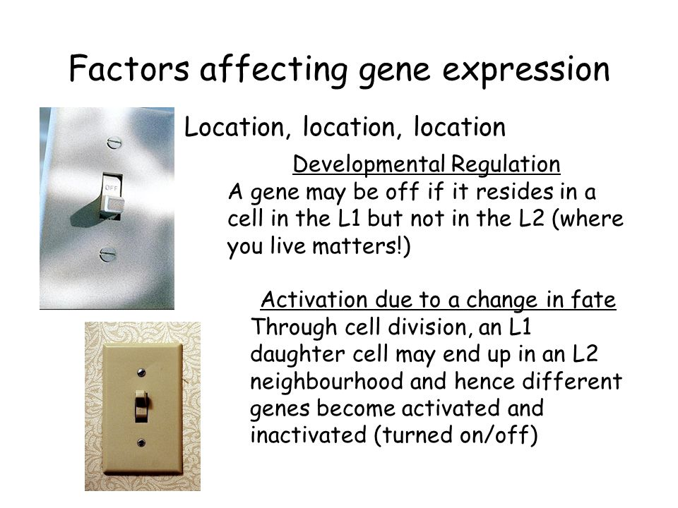 Factors affecting gene expression