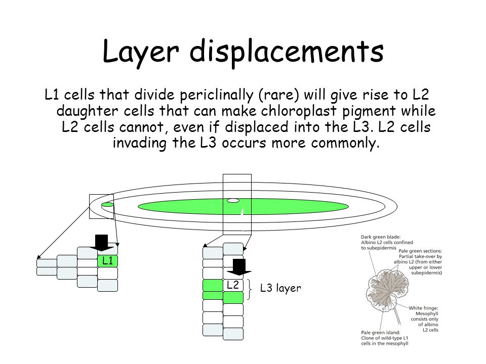 Layer displacements