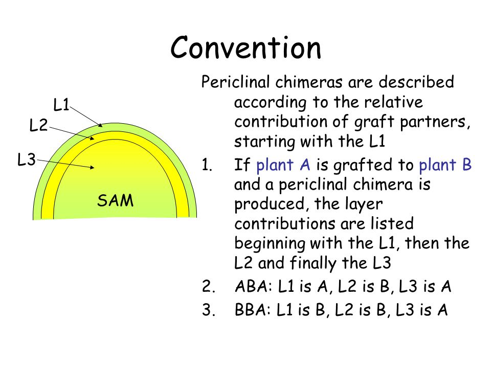 Convention Periclinal chimeras are described according to the relative contribution of graft partners, starting with the L1.