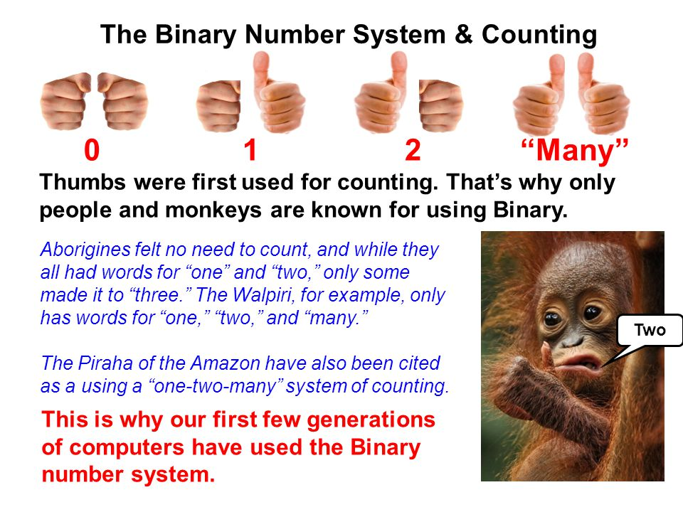 1 2 Many The Binary Number System & Counting