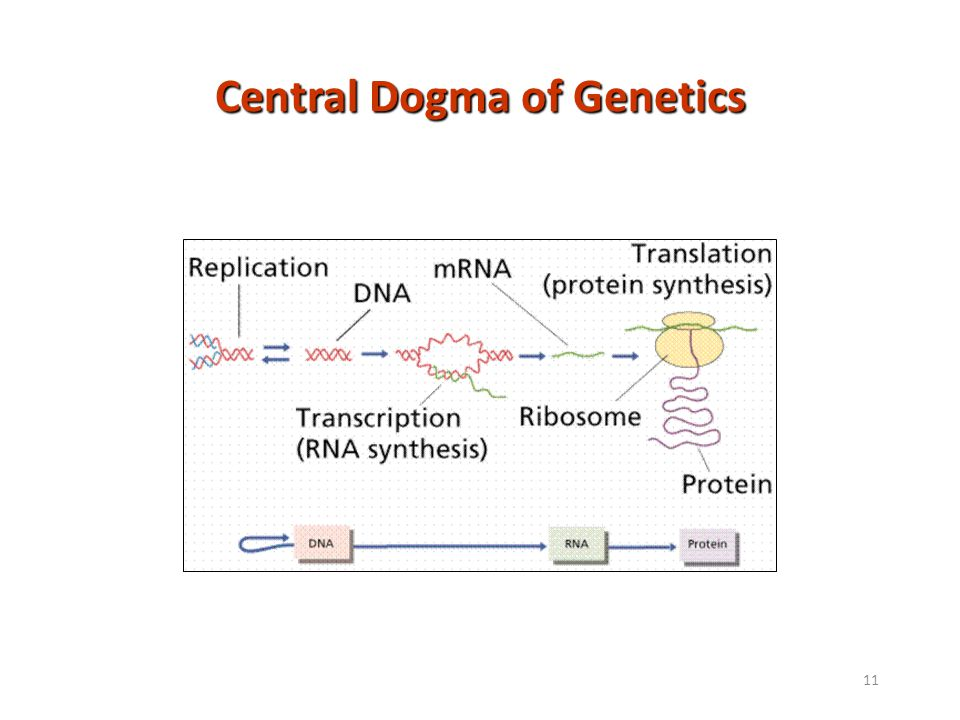 Central Dogma of Genetics