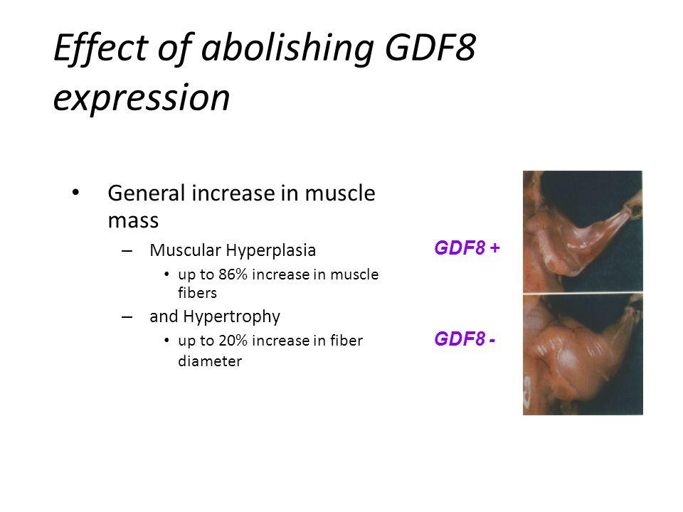 Effect of abolishing GDF8 expression