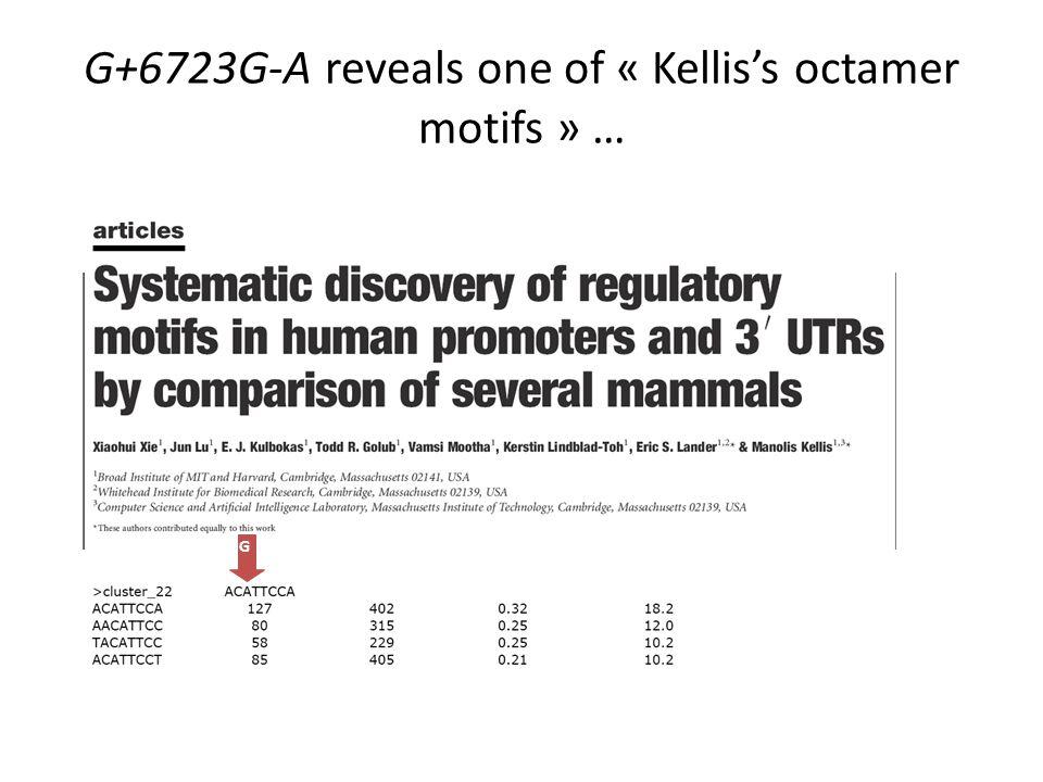 G+6723G-A reveals one of « Kellis's octamer motifs » …