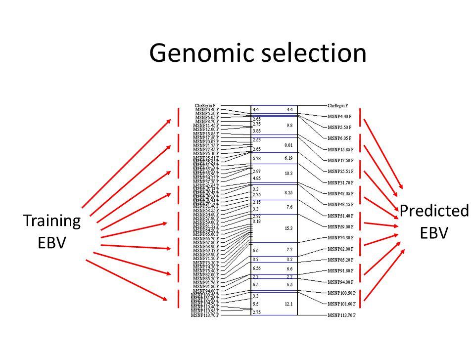 Genomic selection Predicted EBV Training EBV