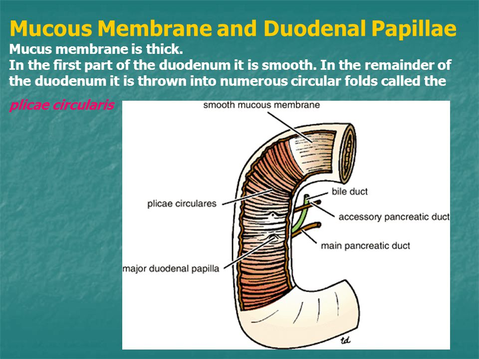 Mucous Membrane and Duodenal Papillae