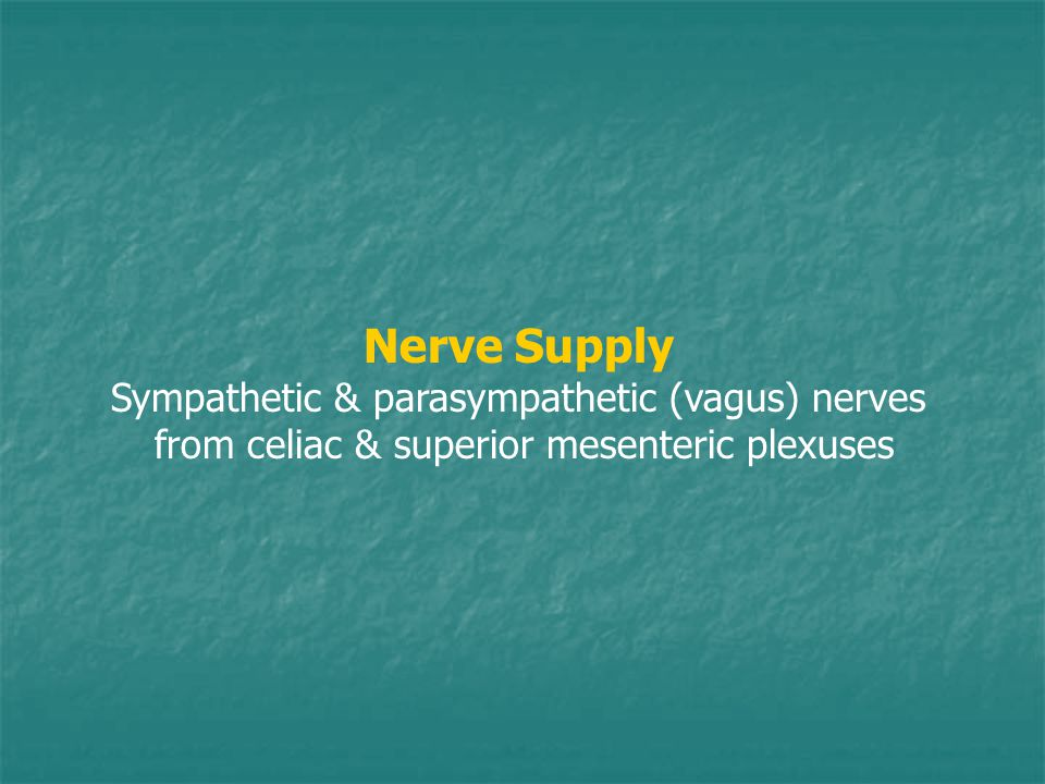 Nerve Supply Sympathetic & parasympathetic (vagus) nerves