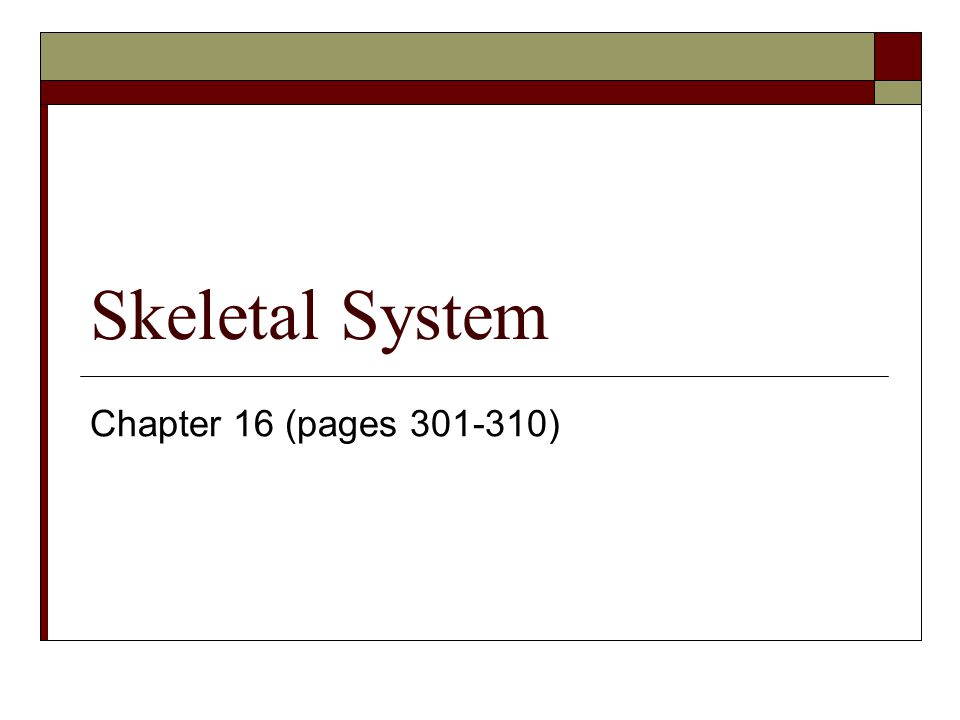 Skeletal System Chapter 16 (pages 301-310)