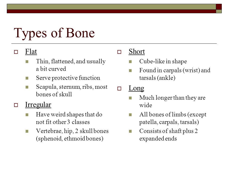 Types of Bone Flat Irregular Short Long