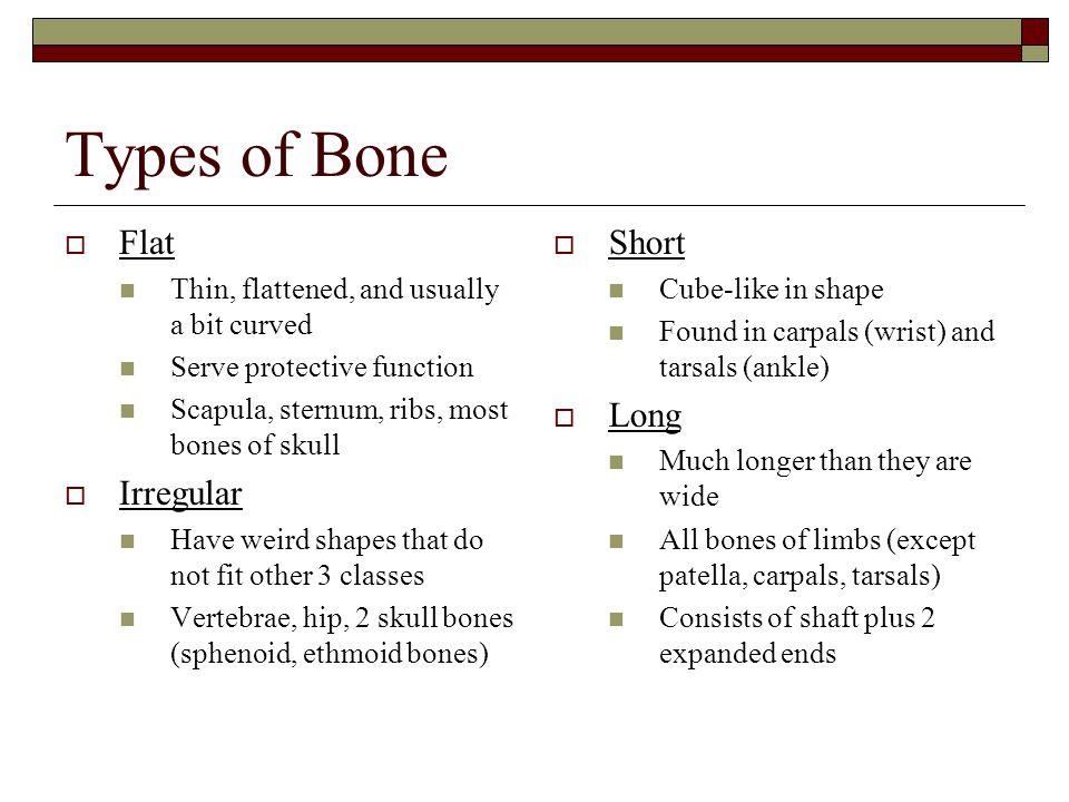 Types of Bone Flat Irregular Short Long