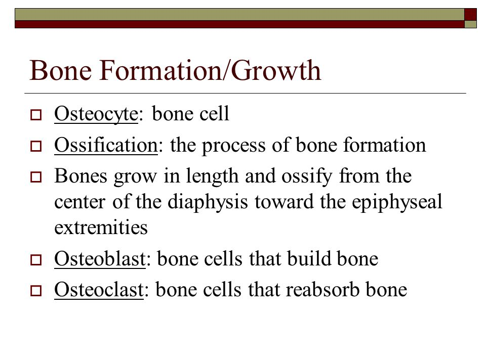 Bone Formation/Growth
