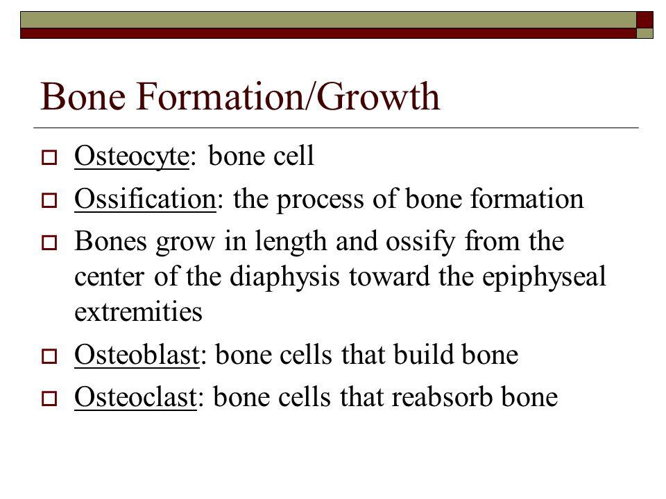 Bone Formation/Growth