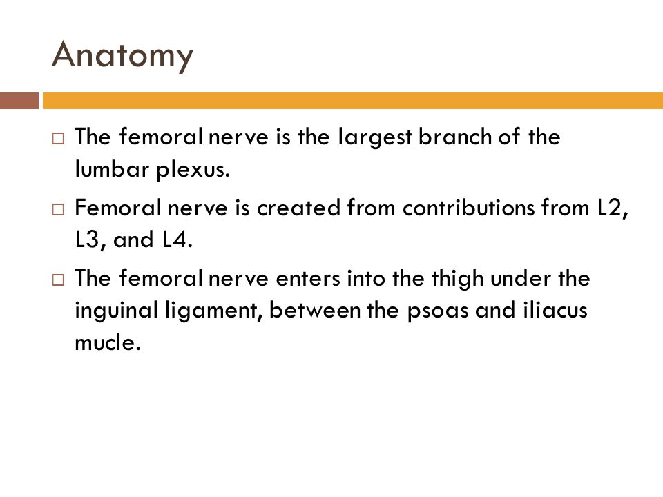 Anatomy The femoral nerve is the largest branch of the lumbar plexus.