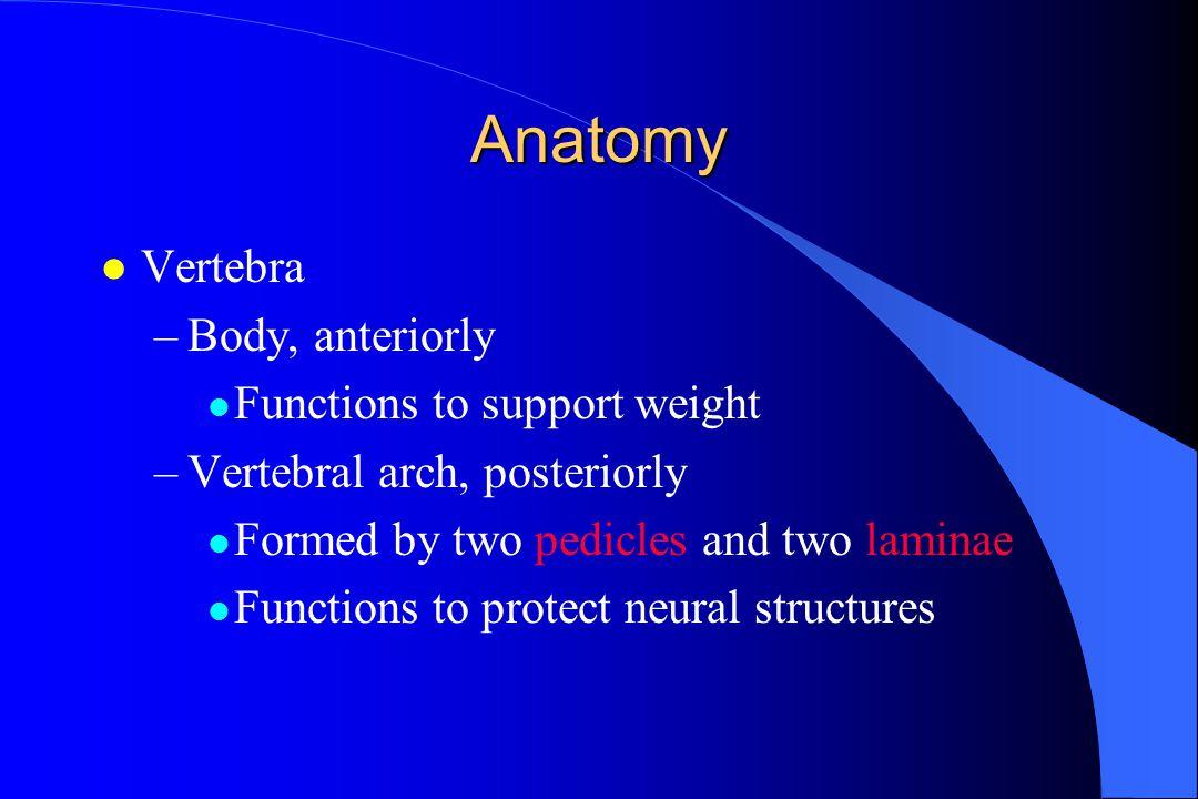 Anatomy Vertebra Body, anteriorly Functions to support weight