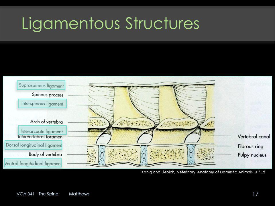 Ligamentous Structures