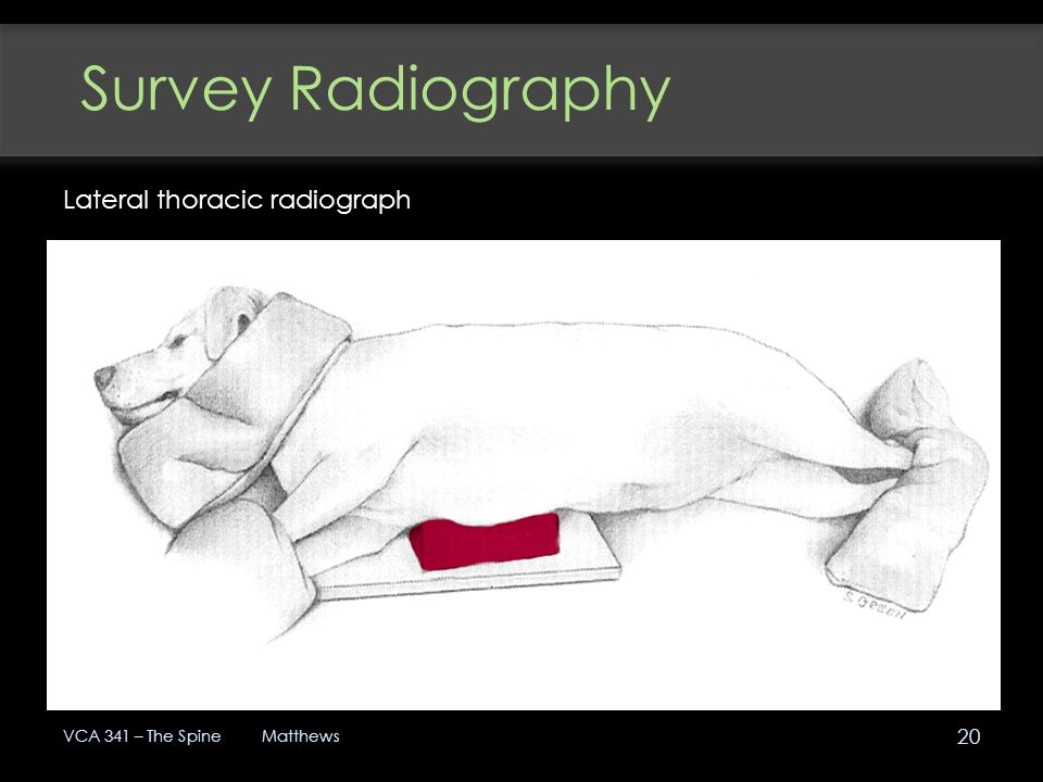 Survey Radiography Lateral thoracic radiograph VCA 341 – The Spine